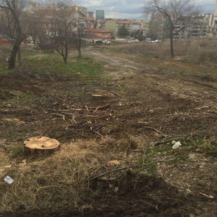 100. Yıl Mahallesi: Yine Yol Yapımı, Yine Kesilen Ağaçlar...