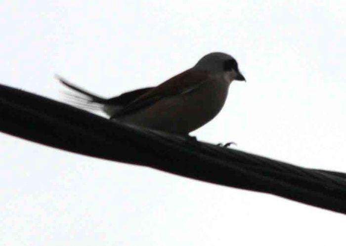 Sapanca Gölünde Bir Kuş
