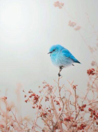 hüsn, aşk ve rint / Hatice Eğilmez Kaya