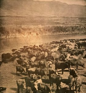 DOKÜMAN – 1- HATAY Amik Gölü - akdogan.gen.tr